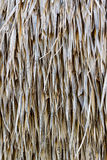 Straw dry background. Royalty Free Stock Image