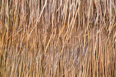 Straw or Dry Grass Background Surface Texture Pattern Stock Photo