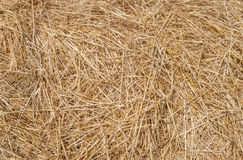 Straw. Dry, loose straw in the sunlight in close-up stock image