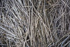 Straw, dry straw texture background, vintage style for design royalty free stock images