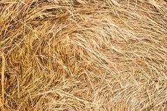 Straw, dry straw texture background, vintage style for design royalty free stock photography