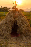 Straw in evening Stock Photography