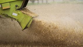 Straw falls from the harvester, macro stock image