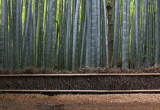 Straw Fence and Bamboo Forest near Kyoto. Royalty Free Stock Images