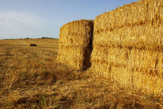 Straw Field Stock Images