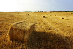 Straw Field Royalty Free Stock Image