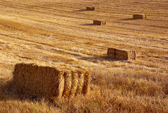 Straw Field royalty free stock photo