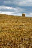Straw field Stock Photos