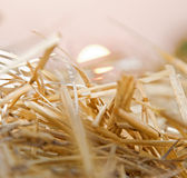 Straw in the field Royalty Free Stock Photography