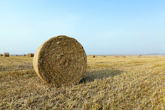 Straw in the field Royalty Free Stock Photos