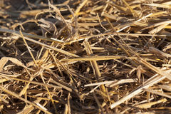 Straw in the field Stock Image
