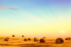 Straw field with bales on sunset. Royalty Free Stock Photo