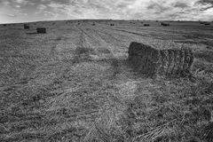Straw on the field Royalty Free Stock Photos