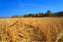 Straw field blue sky stock images