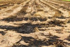 Straw field burn Stock Photos