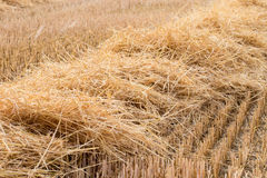 Straw - Field after harvest Stock Image