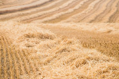 Straw - Field after harvest Royalty Free Stock Photos