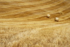 Straw field lines. Field with straw bales and lines stock image