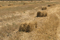 Straw in the field Royalty Free Stock Images