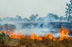 Free Straw Fire Stock Photo - 52451890