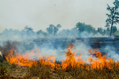 Straw fire Stock Image