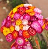 Straw Flower Stock Foto's