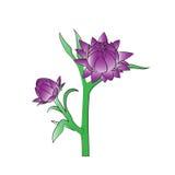Straw Flower Lizenzfreies Stockfoto