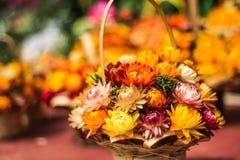 Straw flower basket. Colorful straw flower arrange in basket for gift Royalty Free Stock Photo