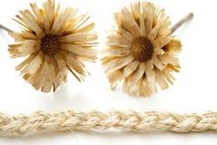 Straw flower Stock Photo