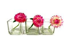 Straw Flowers Imagenes de archivo