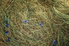 Straw with flowers as background. Top view Royalty Free Stock Photography