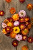 Straw flowers Stock Photos