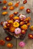 Straw flowers Stock Image