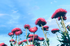 Straw flowers  with  pastel Royalty Free Stock Photos