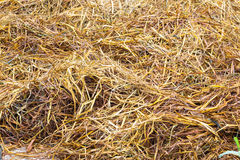 Straw Fodder Bales Royalty Free Stock Images