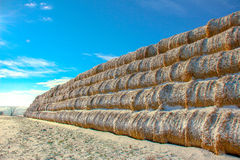 Straw Fodder Bales in Winter Royalty Free Stock Photography