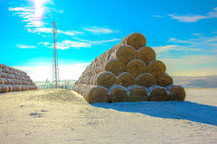 Straw Fodder Bales in Winter Stock Image