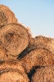 Straw Fodder Bedding Bales rond en hiver Photos stock