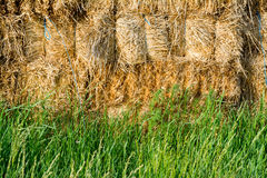 Straw and fresh grass Royalty Free Stock Photography