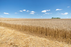Straw in front of a ripe wheat field. Straw in front of a partially already harvested, ripe wheat field. Taken with blue sky with few small clouds Royalty Free Stock Images