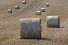 Straw on a grainfield Royalty Free Stock Images
