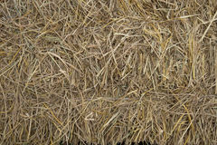 Straw grass backgrounds Stock Images