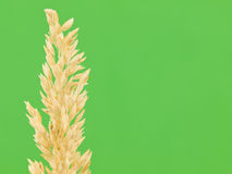 Straw on Green Background Royalty Free Stock Photos