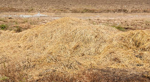 Straw on ground Stock Image