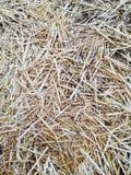 Straw Stock Image