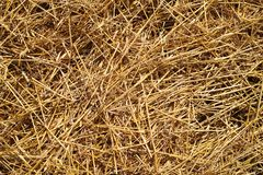 Straw on the ground Royalty Free Stock Photos