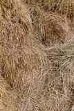 Straw group Royalty Free Stock Image