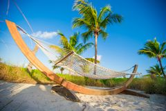 Straw hammock in the shadow of palm on tropical Stock Photography