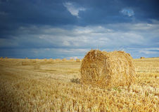 Straw after harvest Stock Photos