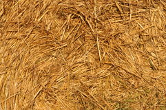Straw after harvest Royalty Free Stock Photos